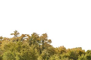 Isolated Forest Tree Background