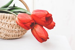 Red tulip flowers in basket