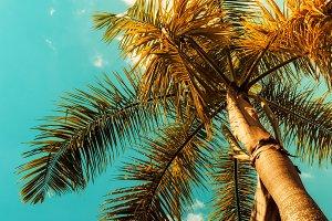 Palm trees. Vintage toned. Sunlight