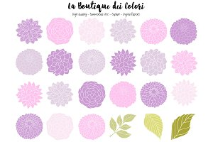 Purple Dahlia Flowers Vector Clipart