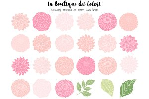 Pink Dahlia Flowers Vector Clipart