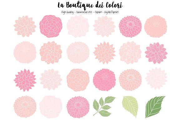 Pink Dahlia Flowers Vector Clipart