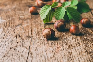 Hazelnuts and branch