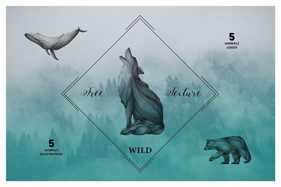 Animals Illustrations in Illustrations