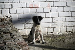 Little stray dog on the street