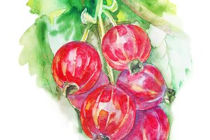 Berries of red currant on the branch - watercolor painting