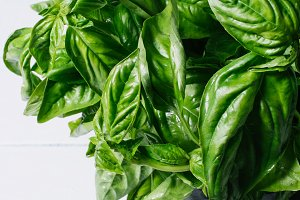 Green basil leaves