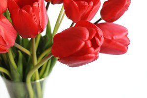 Bouquet of tulips in a vase on white background