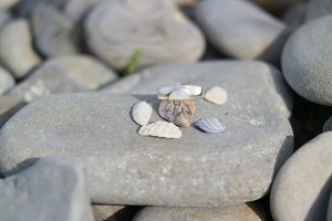 A ring of pebbles and small shell shutters on a large stone