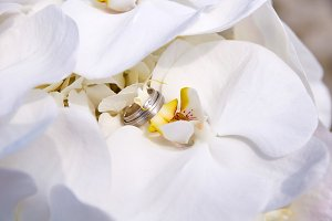 wedding bouquet with orchid and rings