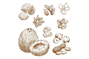 Vector sketch icons of nuts, grain and seeds