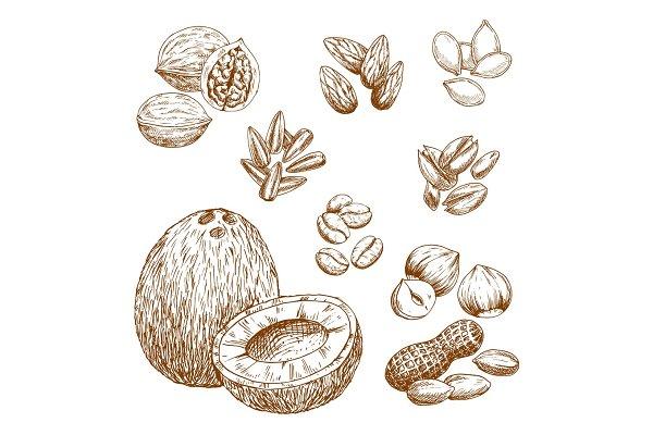 Vector sketch icons of nuts, grain…