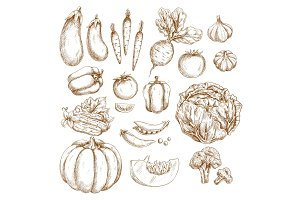 Sketch farm vegetables isolated icons set
