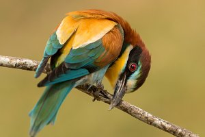Beautiful bird with many colors