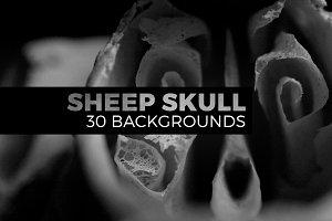 Sheep skull abstract photos