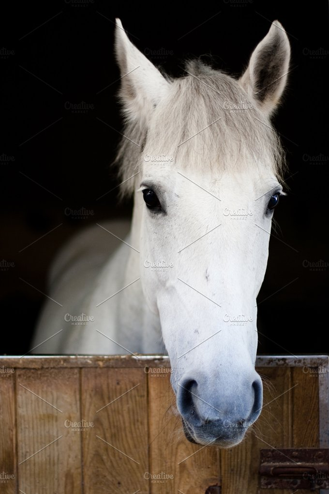 White horse head.jpg - Animals