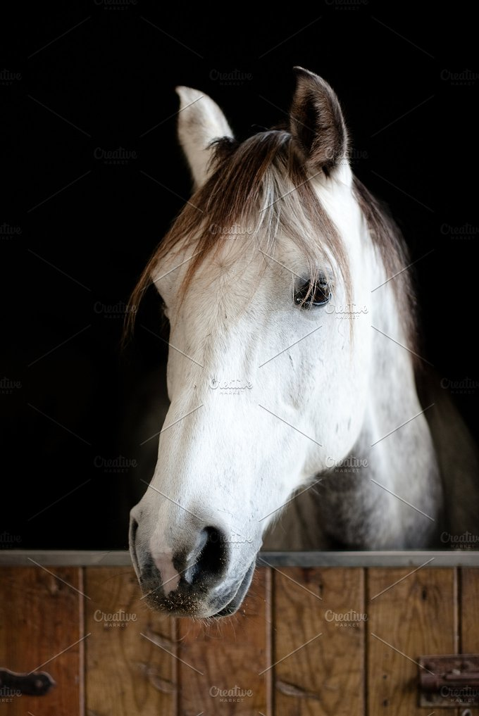 White horse head in stable.jpg - Animals