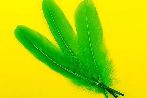 Green feathers art gallery minimal
