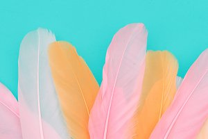 Minimal feathers background