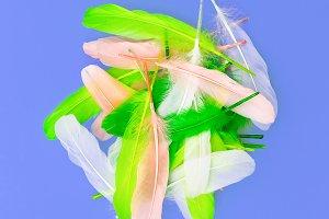 Feathers art design fashion