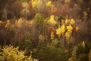 Colourful forest trees in the autumn