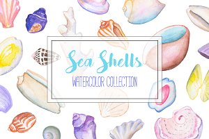 Sea Shells Watercolor Clipart