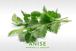 Anise or aniseed