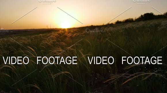 Camera Moves Along Field With Golden Grass On Sunset Smooth Movement