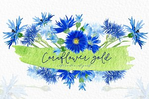 Cornflower gold. Watercolor clipart.