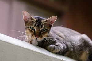 Cute cat looking forward