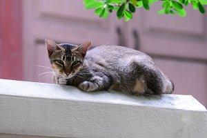 Cute cat looking forward.