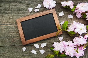 Sakura and blackboard