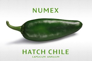 Green Hatch chile