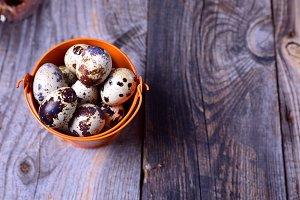 Fresh quail eggs in an orange bucket