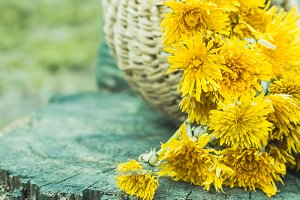 Yellow dandelions in a basket