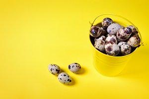 Quail eggs in a yellow iron  bucket
