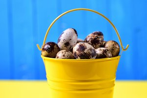 Full bucket quail eggs