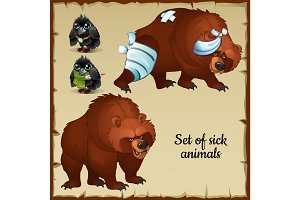 Sick and healthy bear and raven