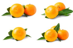 Two ripe tangerines with leaves isolated on white background. Set or collection