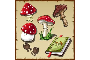 Set of poisonous mushrooms and cookbook