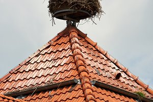 Stork in nest on rooftop