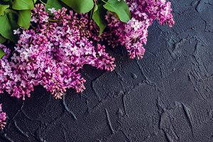 Beautiful lilac on dark stone background