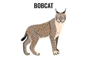 Full length spotted bobcat vector illustration isolated. Wildlife animal cat