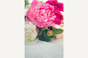 Peony vertical background