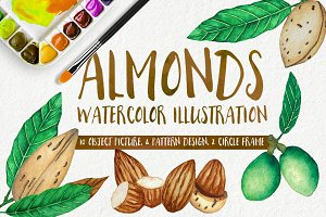 Almonds Watercolors Illustration