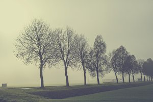 Row of trees in the fog