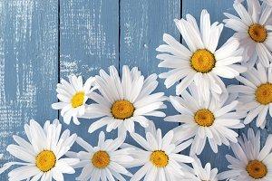 Heads of flowers white big daisies