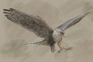 Falcon PSD