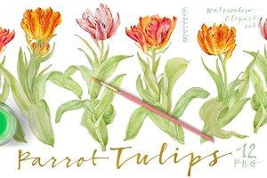 Vintage Parrot Tulips-Clipart set
