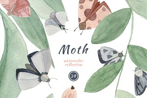 Moths. Watercolor Clip Art